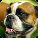 Boxer Dog Live Wallpaper icon