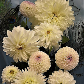 White dahlia display by Mary Gallo - Flowers Flower Arangements ( flowers, nature, nature up close, flower arrangement, dahlias, white dahlias )