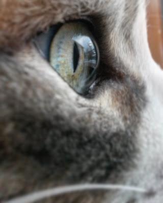 Eye of the tiger  di _martins__