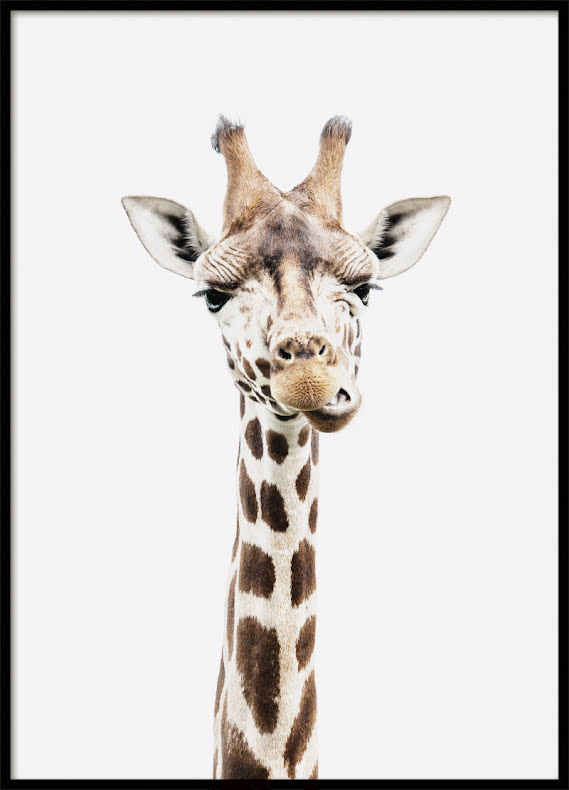 Giraff, Poster