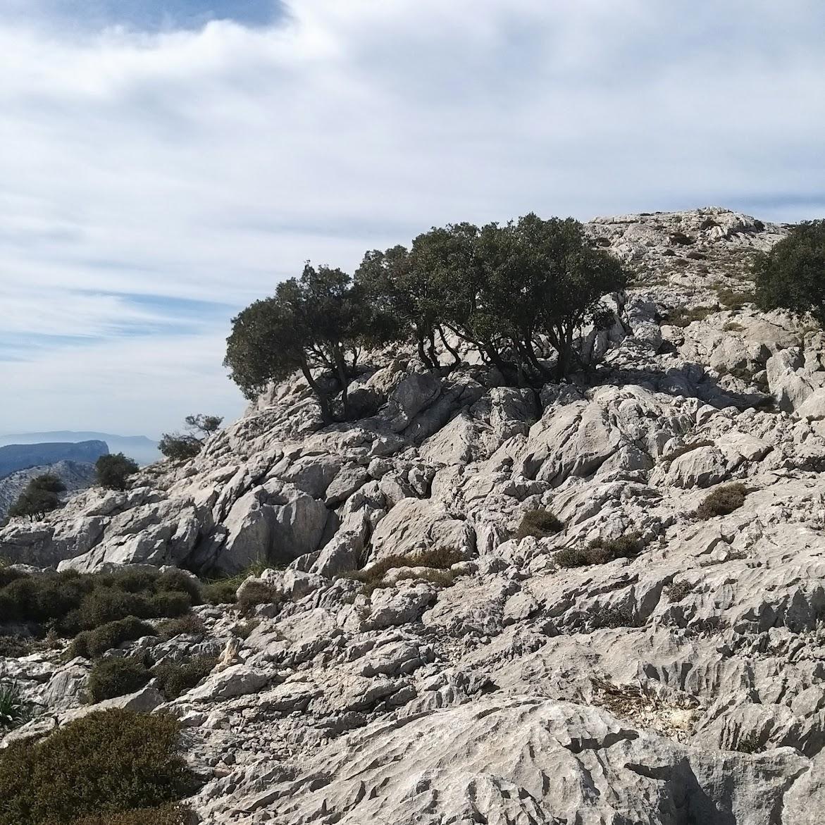 Tramuntana-Gebirge. Es besteht überwiegend aus Kalkgestein. Bild Susanne Reuter