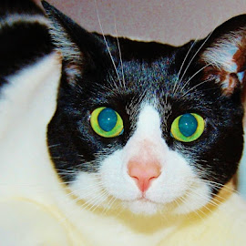 by Donna Van Horn - Animals - Cats Portraits (  )