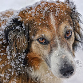 Winter is Here Already? by Twin Wranglers Baker - Animals - Dogs Portraits (  )