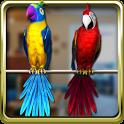 Talking Parrot Couple Free icon