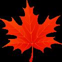 3D Autumn Maple Leaves icon