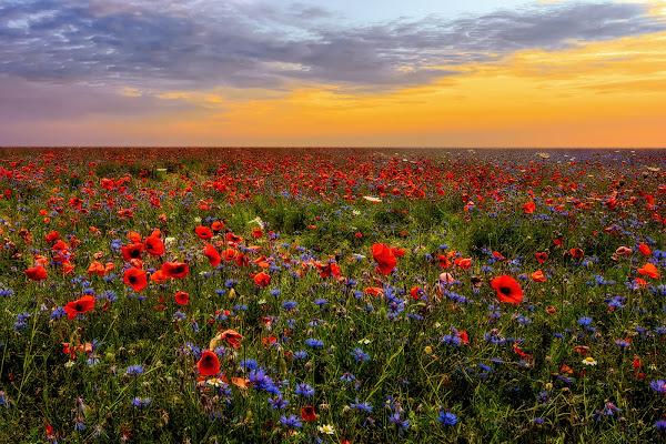 Un mare di fiori di Sara Jazbar