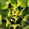 Sunflower budenh1crppnchgenhhdr.jpg