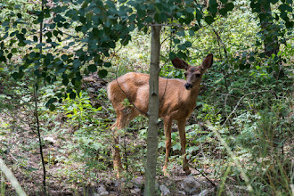 Photo: Fawn in Pecos Canyon