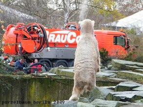 Photo: Knut stellt sich hoch ;-)