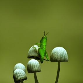 Mushrooms & Grasshopper by Muhammad Buchari - Novices Only Macro