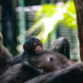 mum and bub by Jason Day - Animals Other
