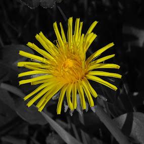 by Arif Burhan - Flowers Single Flower (  )