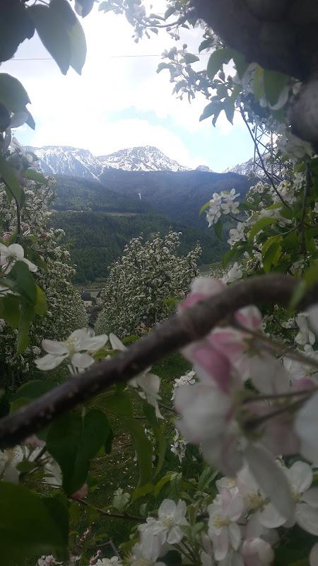 Tra i fiori di lorenzo_herrlich