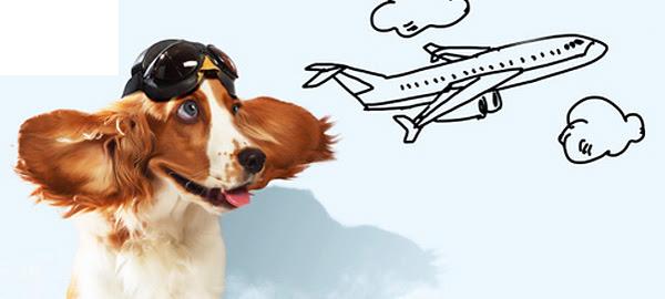 Авиаперевозка собаки