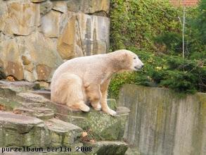 Photo: Wieder oben und nach den Braunbären geschaut ;-)