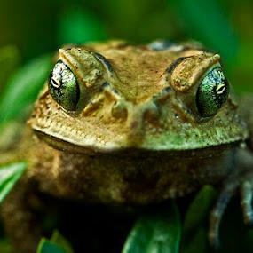 My Eyes by Andi Halil - Animals Amphibians