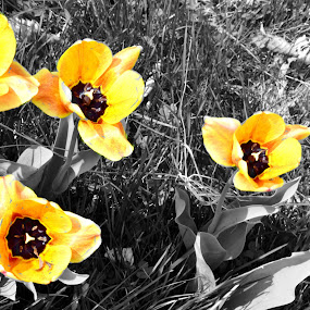 by Andy Bigelow - Flowers Flowers in the Wild