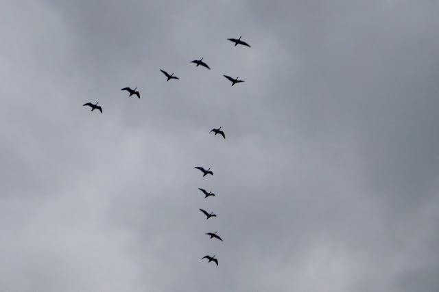 klucz dzikich ptaków