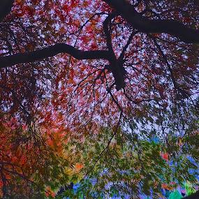 FireBurst by Glen John Terry  - Nature Up Close Trees & Bushes ( fireburst, glenjohnterry,  )