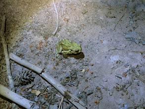 Photo: la grenouille verte qui traverse le chemin est prioritaire !