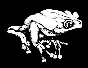 Photo: Phyllomedusa bicolor | Giant monkey frog