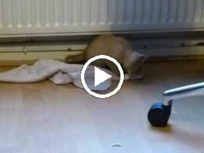 Video: Pontus forever playing