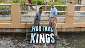 Fish Tank Kings thumbnail