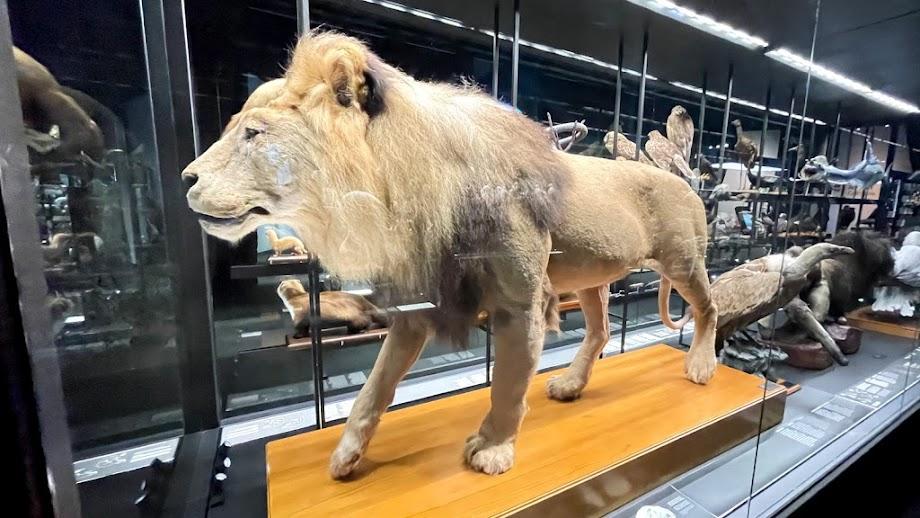 Foto Museu de Ciències Naturals de Barcelona 16