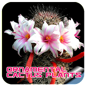 Ornamental Cactus Plants