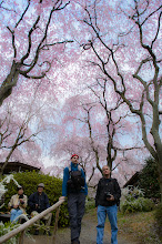 """Photo: This photo appeared in an article on my blog on Apr 14, 2013. この写真は4月14日ブログの記事に載りました。 """"A Wigglegram from Kyoto's Stunning Haradanien Forest Garden of Blossoms"""" http://regex.info/blog/2013-04-14/2242"""