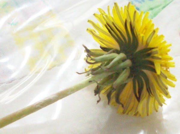 Uncleaned dandelion. Grab stem in left hand & with right hand, pull of dried, green petals that are pointing towards the bottom of the stem.
