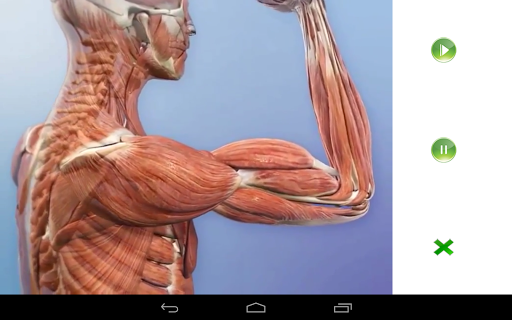 Visual Anatomy Free for Android - Download