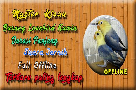 Suara Burung Lovebird Kawin MP3 - náhled