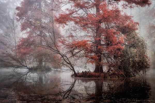 ...e venne l'inverno che uccide il colore... di Sergio Locatelli