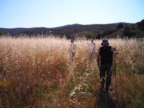 Photo: Por un campo de hierba muy alta