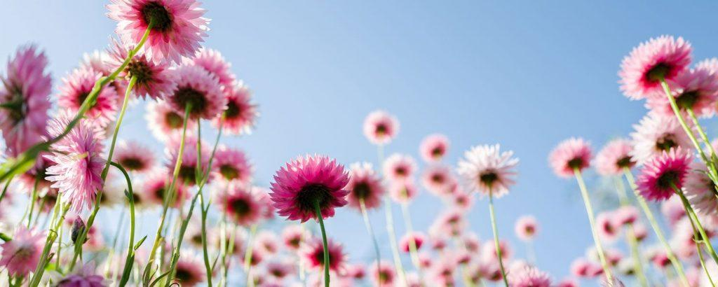 20 Annual Flowers for Every Season | ProFlowers