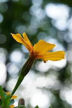 Photo: Sony Alpha 35, Sony SAL-1680Z 16-80mm f/3.5-4.5 Carl Zeiss Lens