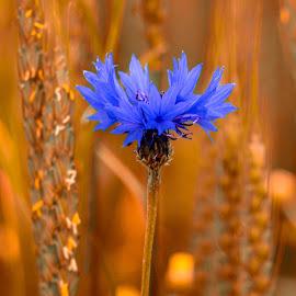 by Estislav Ploshtakov - Flowers Single Flower