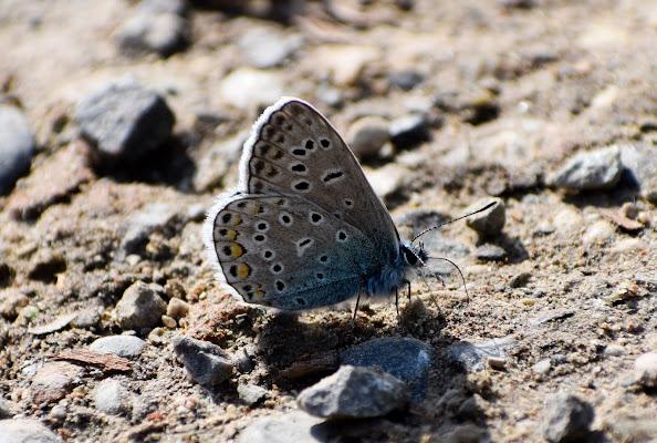 Farfalla di gianluca_pasini