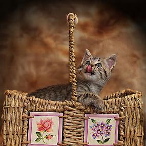 by Susan Hogan - Animals - Cats Portraits (  )