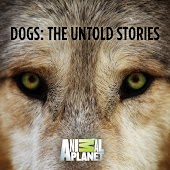 Dogs: The Untold Stories