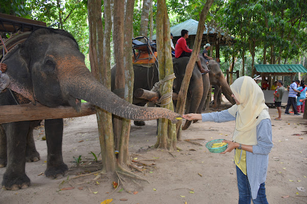 Feed the elephant with banana