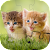 Cats & Dogs Jigsaw Puzzles for kids & toddlers 🐾 file APK for Gaming PC/PS3/PS4 Smart TV