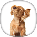 Cocker Spaniel Wallpapers icon