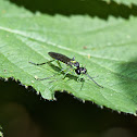 green legged sawfly