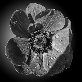 B&W flower 51 by Michael Moore - Black & White Flowers & Plants