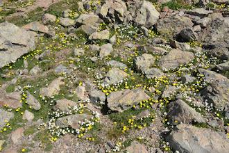 Photo: kvetinkový koberec