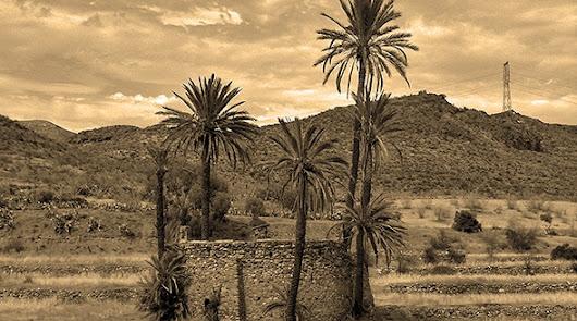 Icónica noria rodeada de palmeras.