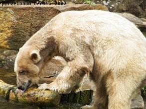 Photo: Knut hat den Baumstamm gefunden :-)