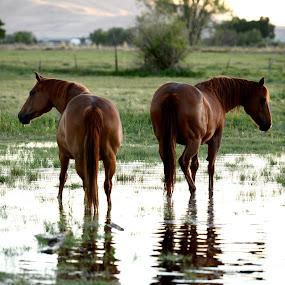 by Aaron Despain - Animals Horses